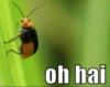 elainetyger: (oh hai bug)