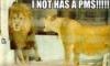 elainetyger: (lion pms)