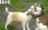 elainetyger: (love dog&cat)