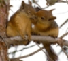elainetyger: (kissing squirrels)