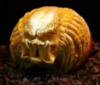 elainetyger: (predator pumpkin)