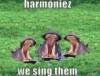 elainetyger: (we sing in harmony hippos)