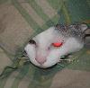 heron61: (Cats)