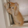 shadeofnight: (orange_cat)