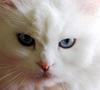 nataly_sun: (cat)