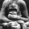 m2149801: (thinking monkey)