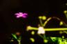 pes_zar: (цветок)