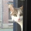 lindalupos: (cat, Dorian)