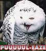redheadedfemme: (owl--Puuuu-lease)