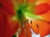erisreg: (blossom1) (Default)