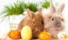 trinaward1: (Easter Bunny)