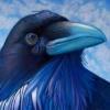 wildpear: (blue raven)