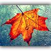 wildpear: (fall leaf (roxicons))