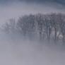 asakiyume: (misty trees)