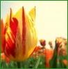 skatie: (Spring)