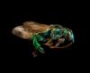 momsalive1: (Wasp)