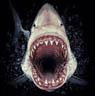plumtreeblossom: (Shark)