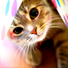 blackcatdisco: (Kitty)