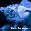 momsalive1: (fly glasses)
