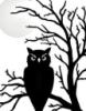 owlstorm_9: (Default)