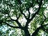 xwjh1: (Tree)