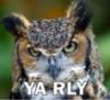 eskanto: (YA RLY owl)