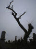 stormsewer: (graveyard tree)