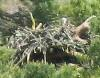 ewein2412: (osprey nest)