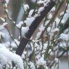 ghoti_mhic_uait: (Snow)