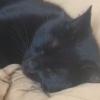ghoti_mhic_uait: (cat, Ninja)