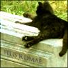 strange_complex: (Gatto di Roma)