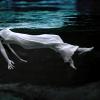 sirena73: (underwater)