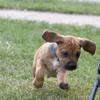 zinkr: (Puppy)