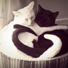 triquetra: (cats)