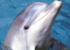 grey_dolphin: (Default)