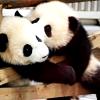 comeclean: (panda kiss)