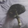 raisedinsuburbs: (Cat)