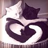 pawsonthemoon: (cat - black/white)