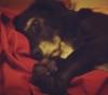hollyquilex: this dog owns my heart (suki)