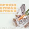 sinfulslasher: (bunny carrot)