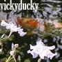 vickyducky: (fran)