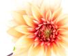 sarine: (Flower)