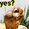 bbgreenie: (turtlewhome)