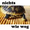 bbgreenie: (turtle nichtswieweg)