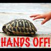 bbgreenie: (turtle handsoff)