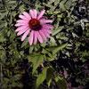 jvar: (Garden)