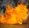 colonelperry42n: (fire kitty)