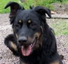 doglets: (kato age two)