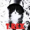 sacramentalist: (kitten-t-rex)