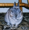 luckylove: (rabbits - grumpy thumper, Grumpy Thumper)